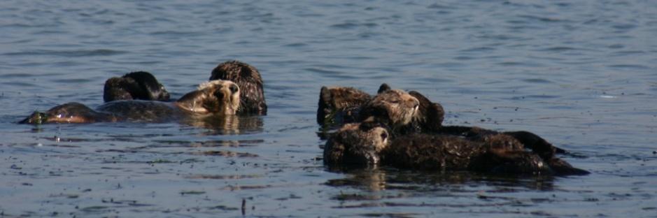 Credit: Becky Stamski / Monterey Bay National Marine Sanctuary