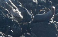SeaLions+Cormorants by Chris Parsons