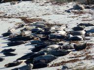Seals-Harbor+Elephant by Chris Parsons