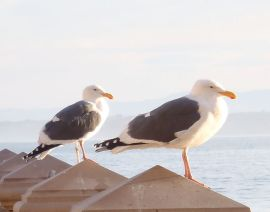 Gulls at Plaza by Chris Parsons