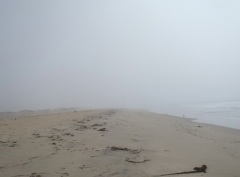 Salinas River Beach fog by CM Parsons