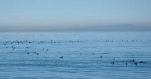 Winter Ducks by CM Parsons