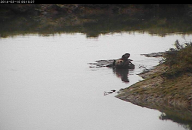 ElkhornSlough OtterCam2