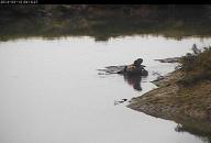 ElkhornSlough OtterCam2
