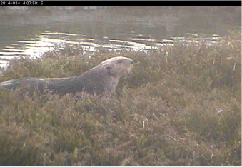 Elkhorn Slough OtterCam3