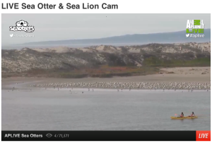 MossLanding Live SeaOtters Cam
