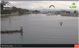 MossLanding Live SeaOtters Cam2