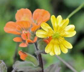 Flowers2 by CMaParsons