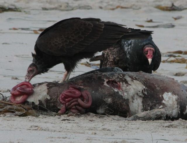 Dead on a beach   Bay-to-Beach Life