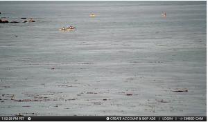 Monterey webcam