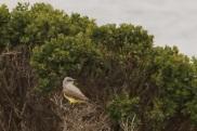 Wkingbird3